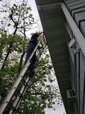 Pest control specialist on a ladder - Guardian Pest Control